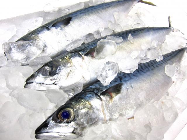 魚の保存方法