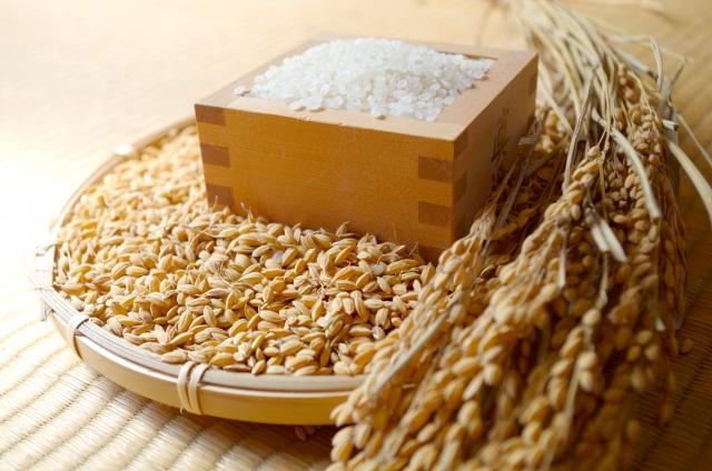 白いたまごの黄身のエサは米