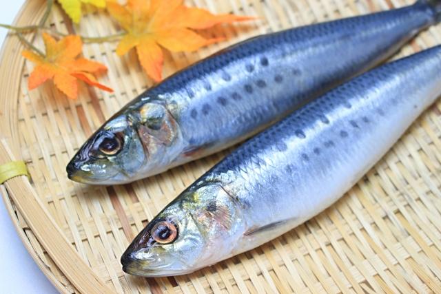 魚の消費期限