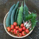 夏野菜の共通点。意外なものも夏野菜だった件