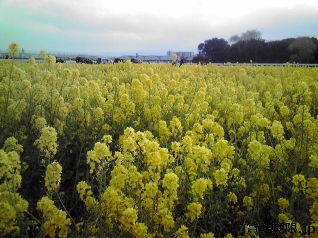 菜の花お常温保存