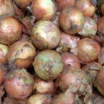 玉ねぎの賞味期限・消費期限・日持ち・保存方法とは