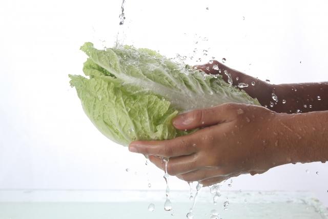白菜の賞味期限