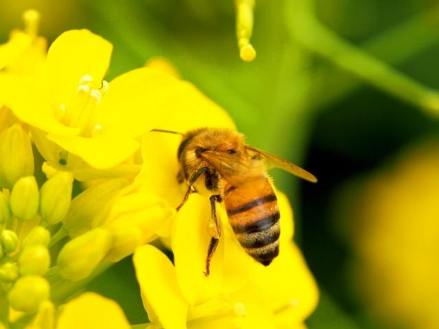 蜂蜜の日持ち
